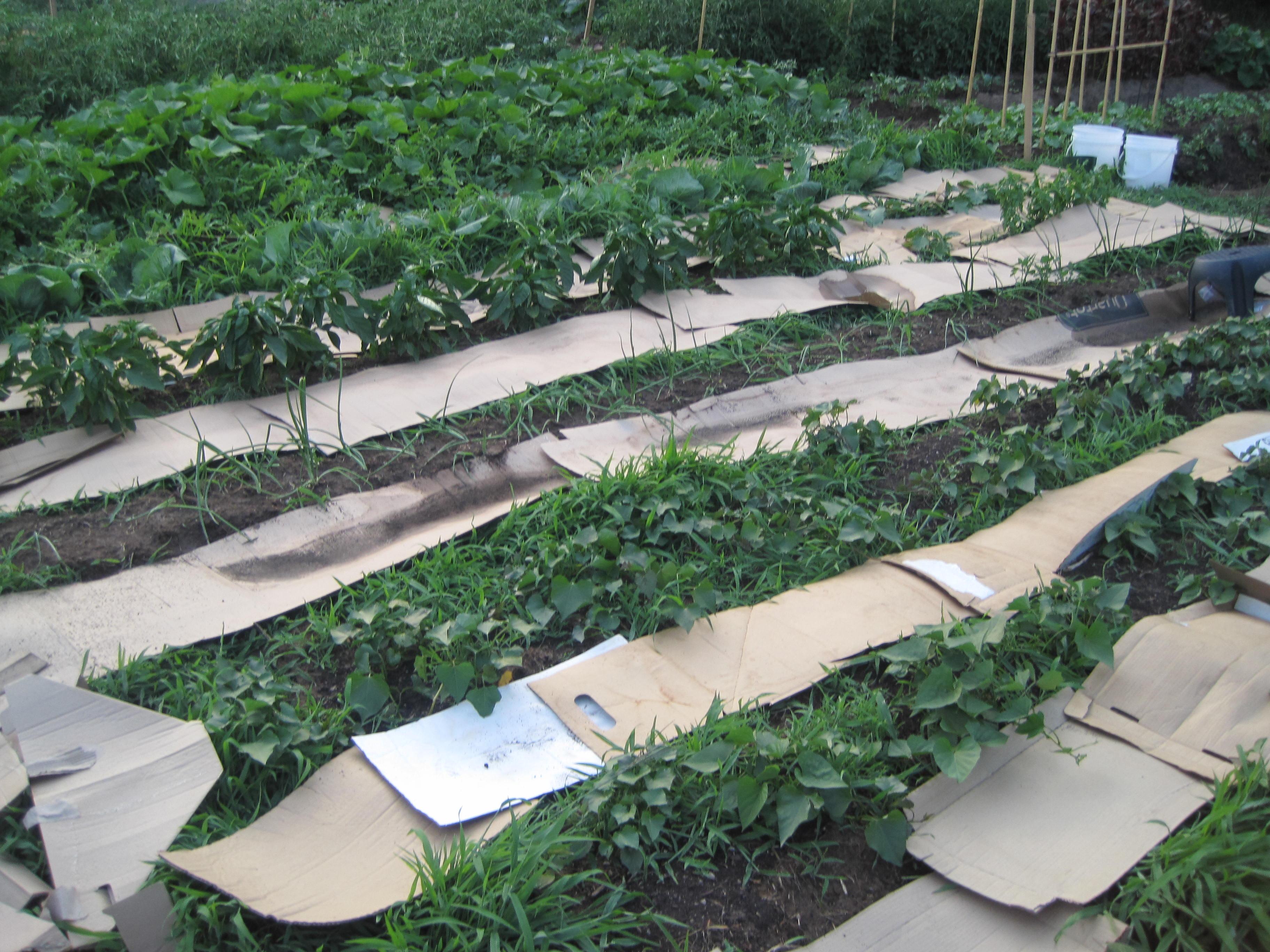 weed barrier for vegetable garden fasci garden. Black Bedroom Furniture Sets. Home Design Ideas